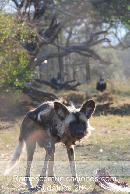 Sudáfrica la aventura de Ramos Comunicaciones Vol.2